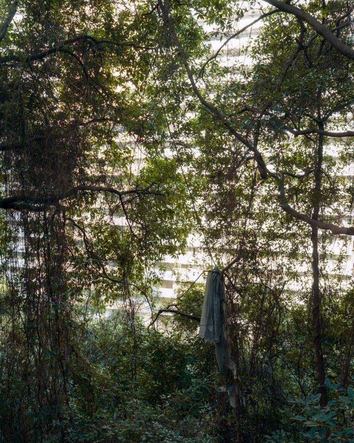Forest 2 | 2010 | 64 x 80 cm, dibond | ed 1/7 + 2 a.p.