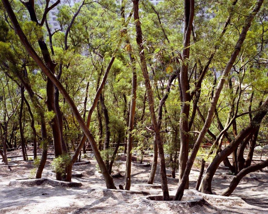 Forest 1 | 2010 | 125 x 100 cm, dibond | ed 1/7 + 2 a.p.