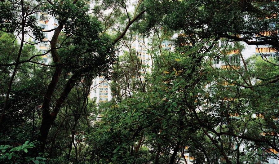 Forest 5 | 2010 | 165 x 100 cm, dibond | ed 1/7 + 2 a.p.