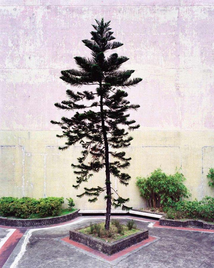 Tree 2 | 2010 | 64 x 80 cm, framed, diptych | ed 1/7 + 2 a.p.