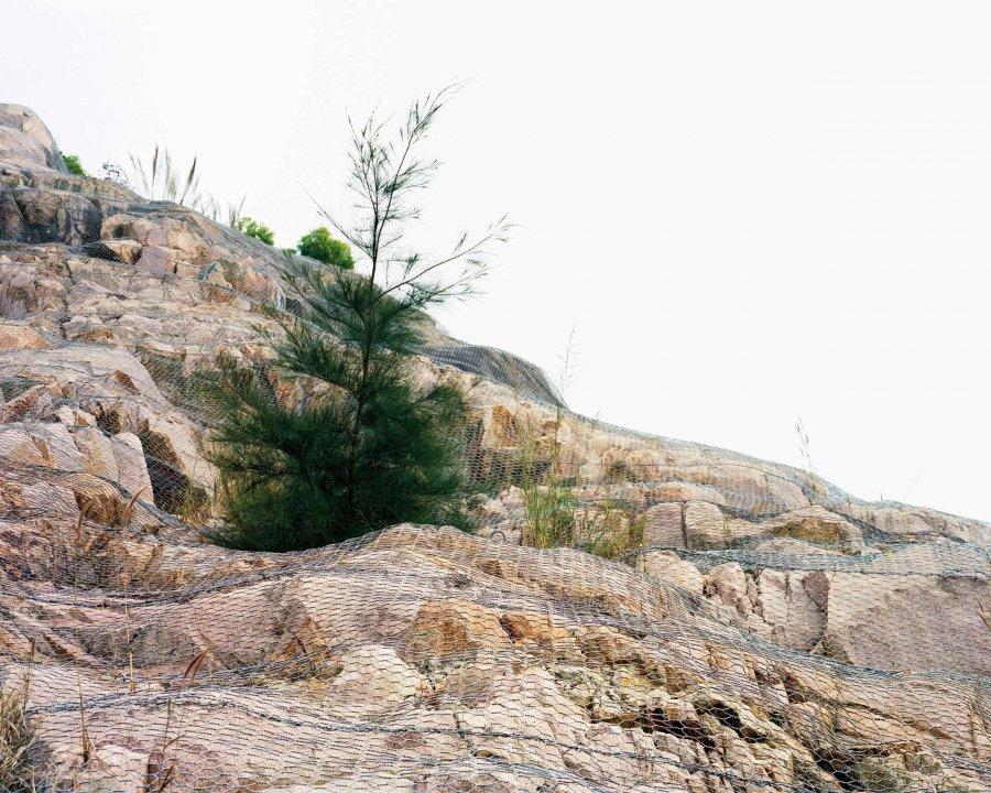 Tree 1 | 2010 | 125 x 100 cm, dibond | ed 1/7 + 2 a.p.